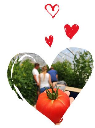 Votre été au B'twin village : la tomate locabelle